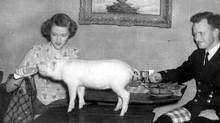 Cortlandt and Jean Mackenzie taken on their honeymoon in 1945 at restaurant Au Lutin Qui Bouffe in Montreal. Their unconventional life included a menagerie of animals. (Courtesy of the Mackenzie family)