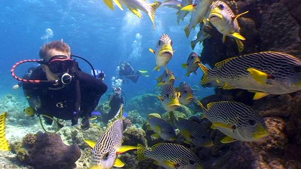 A diver observes some fish in the Great Barrier Reef near Lizard Island Resort, Australia.