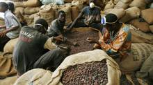 Men grade cocoa beans in a warehouse in Gonate, western Ivory Coast. (LUC GNAGO/REUTERS)