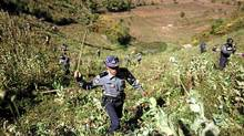 Policemen and villagers use sticks and grass cutters to destroy a poppy field above the village of Tar-Pu, in the Myanmar mountains of Shan state. (Damir Sagolj/Reuters/Damir Sagolj/Reuters)