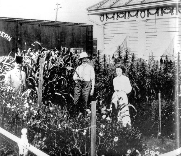 Hemp was grown throughout Western Canada by European settlers before it was outlawed along with marijuana in 1938. This 1909 photo shows Saskatoon Mayor William Hopkins (left) standing with Board of Trade commissioner F. Maclure Sclanders and an unidentified woman in front of a demonstration garden that includes hemp.
