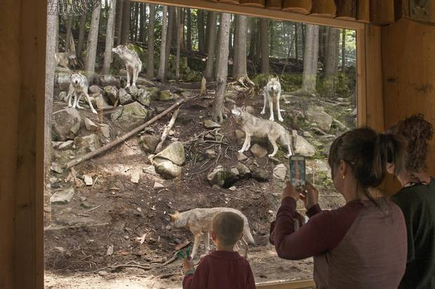 Parc Omega in Montebello, Que., allows visitors to feed deer and elk by hand, but the wolves are quite rightfully only viewed from behind glass.