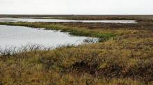 Dead vegetation is shown around a lake in the Mackenzie Delta. (Joshua Thienpont/Queen's University)