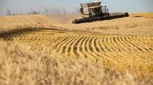 A report released by Statistics Canada says the number of farms in Canada is dropping, while their size is growing along with the age of the people running them. (CHRIS BOLIN FOR THE GLOBE AND MAIL)