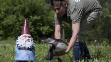 Heidi Ollek, a keeper in the African Savanna pavilion, introduces a penguin to the Travelocity gnome at the Toronto Zoo on Friday last week. Travelocity staff were taking photographs of the company mascot in various locations around the zoo. (Matthew Sherwood For The Globe and Mail)