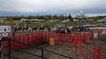 There is constant and increasing pressure to develop agricultural land for golf courses, condominiums and shopping malls – or rodeo grounds, as happened this year in Fort St. John, B.C.