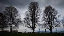 Kitsilano Beach Park in Vancouver, B.C., on Wednesday March 26, 2014. (Darryl Dyck for The Globe and Mail)