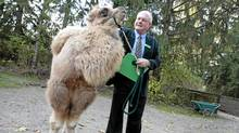 Kumar, a three-month-old Bactrian camel, with Dr. Bill Rapley at the Toronto Zoo (Peter Power/The Globe and Mail/Peter Power/The Globe and Mail)