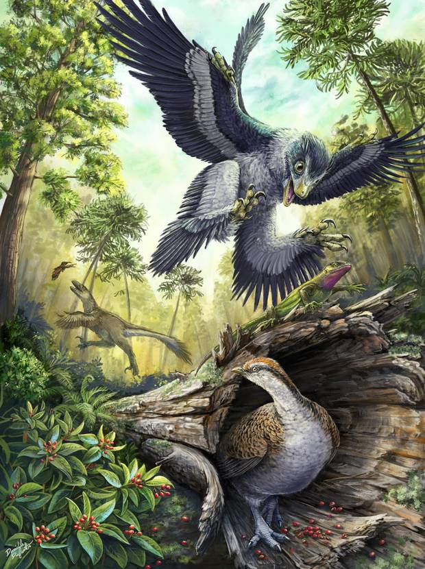 A small feathered dinosaur swoops down on an unsuspecting lizard while a bird hunts for seeds in this reconstructed slice of life in Alberta 66 million years ago. A new theory suggests that a seed diet helped birds survive the mass extinction event that wiped out all other dinosaurs.