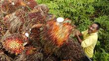 A worker loads oil palm fruit into a lorry at a local palm plantation in Shah Alam outside Kuala Lumpur November 21, 2013. (SAMSUL SAID/REUTERS)