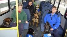 Service dogs being trained by Helping Paws in Creston, B.C.