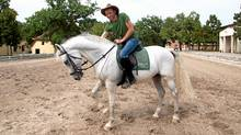 The author learns to ride a Lipizzaner. Unlike Western horses, Lipizzaners interpret every move by the rider as a direction. (Robin Esrock/Robin Esrock)