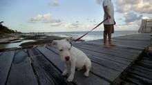 "John McAfee's dog named ""Soltan"" and a security guard stand on a deck in front of the beachside entrance to the home of software company founder in Ambergris Caye, Belize, Thursday Nov. 15, 2012. Software company founder John McAfee, who has been identified as a ""person of interest"" in the killing of his neighbour, 52-year-old Gregory Viant Faull, allegedly over a dispute about McAfee's dogs. (Moises Castillo/AP)"