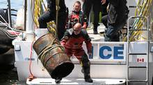 Toronto police remove an oil drum from the harbour on Saturday. The drum contained human remains. (John Hanley/John Hanley for the Globe and Mail)