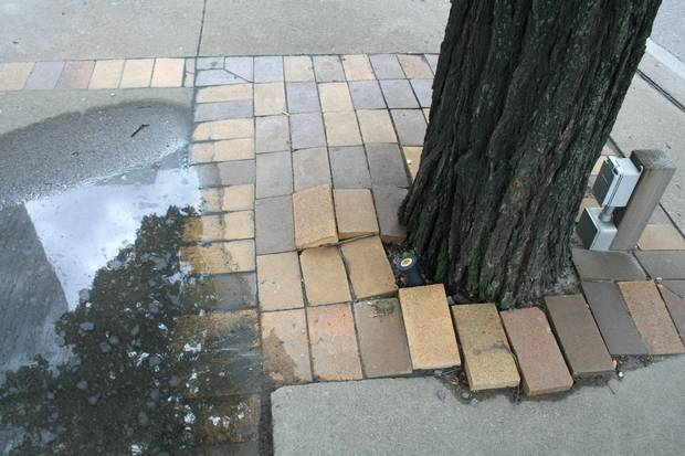 The caramel and chocolate brown bricks that provide trim for all islands are being dramatically pushed up by tree roots on Island A.