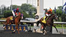 Jockey Justin Stein and horse Strait of Dover cross the finish line to win the running of the 153rd Queen's plate (Aaron Vincent Elkaim/The Canadian Press)