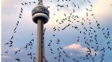 Photos of midges taken outside a condo window in downtown Toronto. (Chris Manza for the Globe and Mail)
