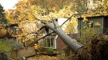 An uprooted large red oak tree rests atop 151 Neville Park in the Beaches area of Toronto as work crews begin clearing the large limbs. The tree was toppled by winds last night. The homeowner, Barry Wadman, and his wife, were in the back bedroom, (now open to the elements) when the tree struck on the morning of Oct. 30, 2012 after the high winds and rain in Ontario due to Hurricane Sandy. (Pete Power/The Globe and Mail)
