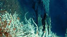 Undersea vents spewing carbon dioxide into the oceans are a reliable way to see how the oceans will acidify due to climate change, Jason Hall-Spencer says. (Verena Tunnicliffe/University of Victoria)