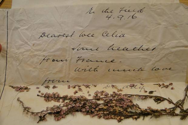 Each letter sent by Lt. Col. Cantlie includes a pressed flower – a clipping of rose or lavender – picked from the fields and gardens he passed.