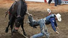 Jake Wright of Milford, Utah, gets his boot caught in a stirrup on the horse Crazy Day Job in the saddle bronc event during day 3 of the Calgary Stampede rodeo in Calgary, Alberta, July 6, 2014. (TODD KOROL/REUTERS)
