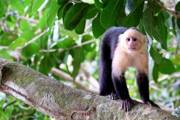 For small country, Costa Rica boasts enormous biodiversity, with 5 per cent of the world's species of flora and fauna.