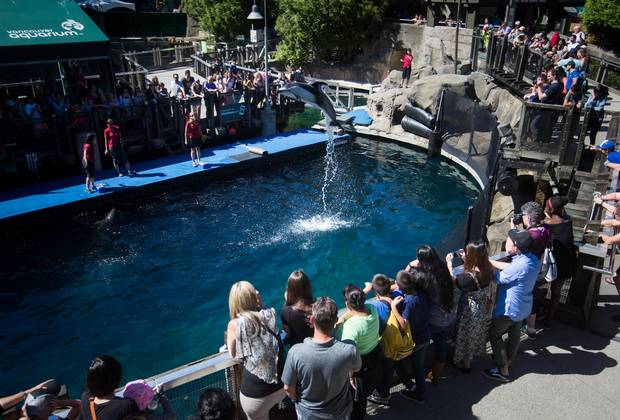 Helen, a Pacific white-sided dolphin, leaps out of the water as people watch at the Vancouver Aquarium.
