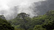 It really is forest bathing in the 100 per cent humidity of Costa Rica's Cloud Forest. (Kent Gilbert/AP)