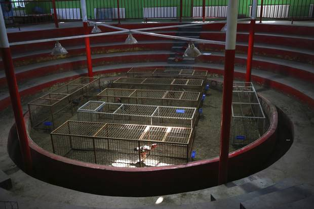 A cockfighting arena in Turpan, which has been barred from holding fights for months ahead of China's Communist Party Congress on Oct. 18.