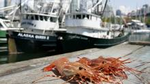 Vancouver's got the Spot Prawn Festival starting May 11. (Laura Leyshon For The Globe and Mail)