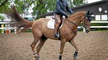 "Equestrian rider Eric Lamaze rides ""Deryl Chin deMuze"" in an exercise arena at Spruce Meadows in Calgary, Alta., Tuesday, June 5, 2012. Lamaze spoke about two of the possible horses he will be riding at the London Olympics. His former mount Hickstead died during a competition in 2011. (Jeff McIntosh/The Canadian Press)"