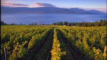 The vineyards of CedarCreek Estate Winery, overlooking Okanagan Lake. (Brian Sprout/CedarCreek Estate Winery)