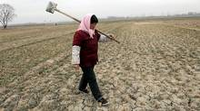 A farmer walks on a cracked wheat field at Yangxi village in Jining, east China's Shandong province (Fan Changguo/AP)