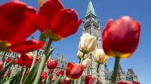 Tulips bloom on Parliament Hill Tuesday May 7, 2013 in Ottawa. (Adrian Wyld/THE CANADIAN PRESS)