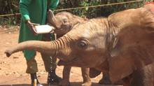 At i-to-i, a volunteer travel company, book a trip to care for orphaned elephants in South Africa.
