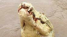 Locals in Australia's Northern Territory dubbed a rare part-albino saltwater crocodile – shown in a Facebook post by Original Adelaide River Queen Jumping Crocodile Cruises – 'Michael Jackson.' The crocodile was killed after reportedly killing a fisherman. (ORIGINAL ADELAIDE RIVER QUEEN JUMPING CROCODILE CRUISES/FACEBOOK)