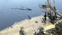 Oil from a pipeline leak coats a pond near Sundre, Alta., Friday, June 8, 2012. (Jeff McIntosh/THE CANADIAN PRESS)