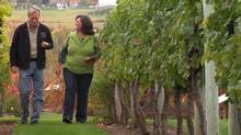 Sandra and Kenn Oldfield make wine near Oliver, B.C. Ms. Oldfield's priority was cutting costs without laying off any of the 22 full-time staff.