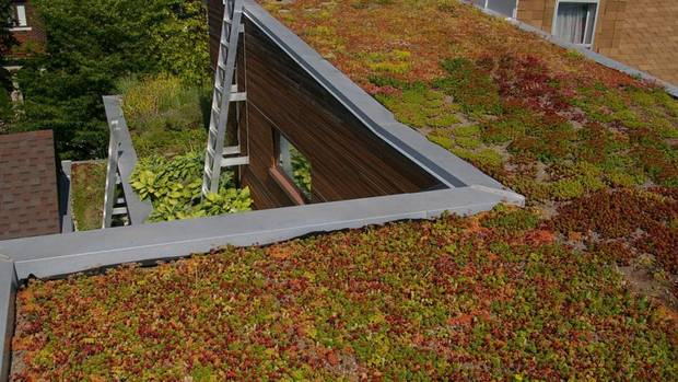 This Toronto-area residence boasts multiple green roofs on the non-sloped portions of the house, writes Leslie Doyle of Restoration Gardens Inc. 'The top roof is planted with drought tolerant species of sedums in four different planting styles which allow both the client and ourselves to monitor the growth rates, maintenance requirements and survivability of the varying products.' The roofs not only provide additional insulation to the house, they provide aesthetically pleasing views at a higher elevation. (Restoration Gardens Inc.)