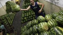 A worker arranges watermelons at a wholesale supply depot, before shipping them to markets in Sao Paulo, Feb. 1, 2013. Brazil's weak trade performance in January reflects the challenges facing the Brazilian economy as the global slowdown curbs demand for its products and local exporters struggle with sky-high costs that have made them less competitive. (NACHO DOCE/REUTERS)