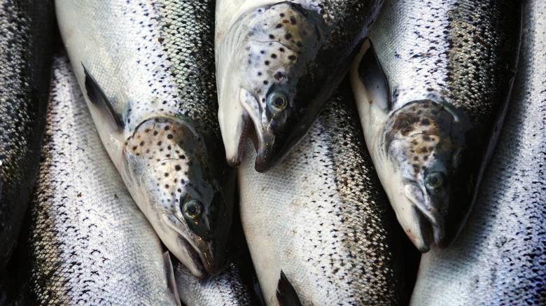 Omega-3 fatty acids, like those found in fish, help maintain telomeres.