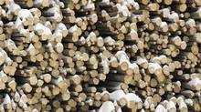 Snow covered logs are seen outside the Babine Forest Products mill in Burns Lake, B.C. Sunday, Jan. 22, 2012. (Jonathan Hayward/ The Canadian Press/Jonathan Hayward/ The Canadian Press)