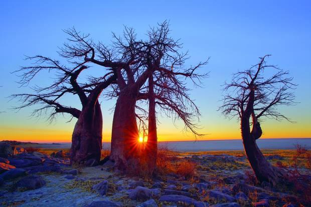 Kubu Island, Botswana.