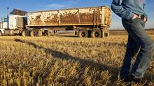 A fall harvest in central Alberta is seen in this file photo. A new BMO study says Canada's agriculture industry is helped on the world stage by its 'productivity edge.' (Chris Bolin For The Globe and Mail)