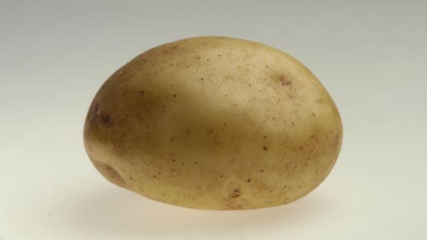 A Yukon gold potato.