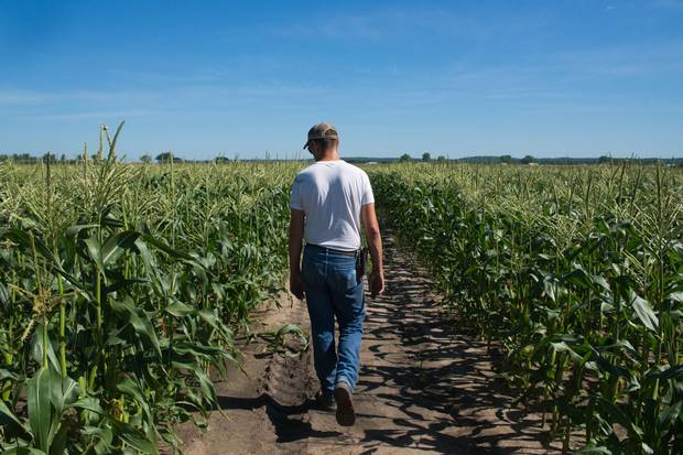 June 20, 2017: Lowell Neitzel checks on a plot of sweet corn in Lawrence, Kansas. Mr. Neitzel was one of the Kansas corn farmers Adrian Morrow spoke with for a story about NAFTA's economic footprint in red states.