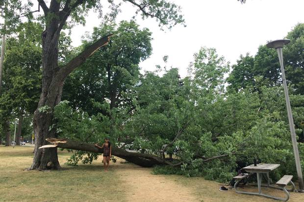 Lena Trinh poses beside the large branch of a silver maple, which fell suddenly July 5 in Dovercourt Park. The limb narrowly missed the sisters, who were in the park to practice yoga.