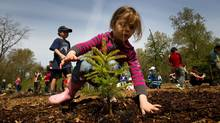 Four-year-old Norah Basha plants a tree at Everett Crowley Park as part of Earth Day celebrations in Vancouver, B.C., on Saturday April 21, 2012. (DARRYL DYCK/THE CANADIAN PRESS)