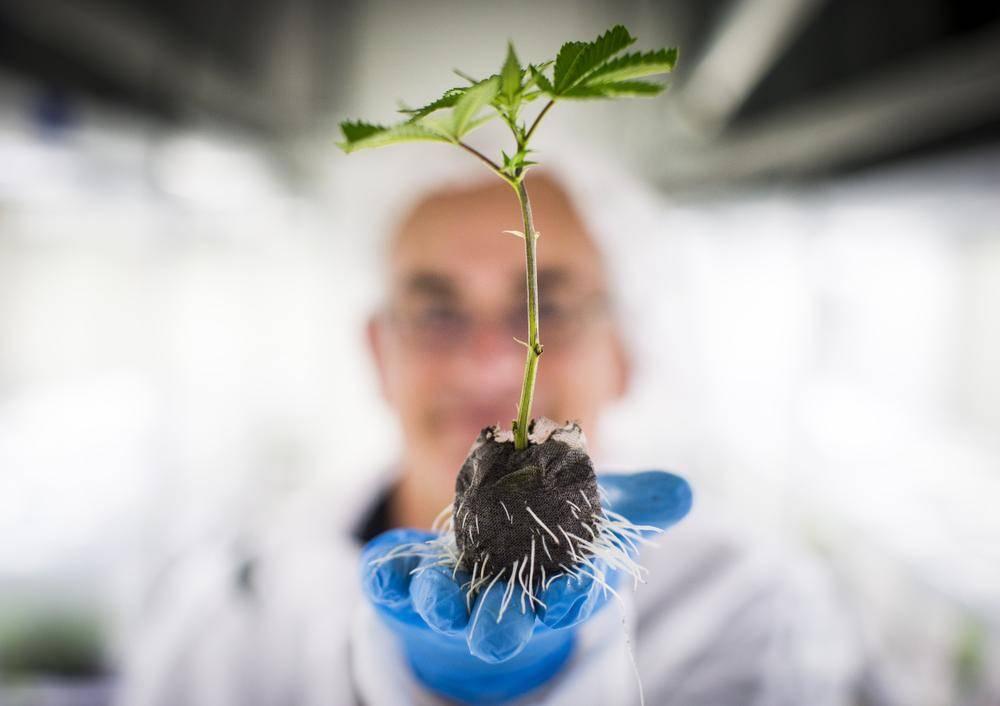 High hopes: Investors take aim at Canada's marijuana industry