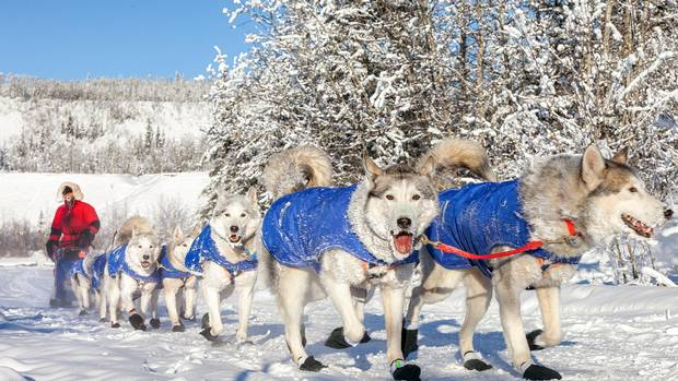 Yukon Quest: The toughest dog sled race in the world begins